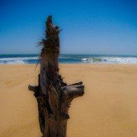 Друид на пляже... :: Арина