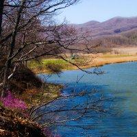 Весна... :: Арина