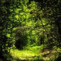 Туннель в лесу. :: Василий Малыш
