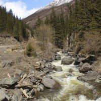 Речка Чибитка в горах Алтая :: И.В.К. ))