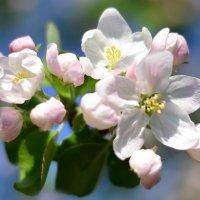 Весны прекрасные мгновенья... :: Алла Кочергина