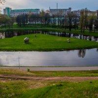 Река Витьба :: Виктор Николаев