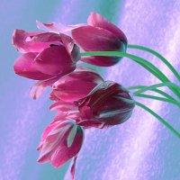 Тюльпаны. :: Наталья
