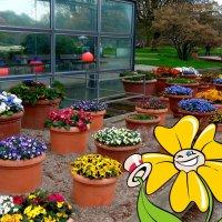 Добро пожаловать в мир цветов! :: Nina Yudicheva
