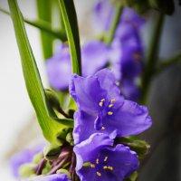 просто так....цветочки :: Ксения