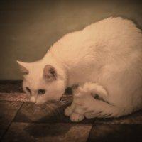 фото кот :: Георгий Морозов