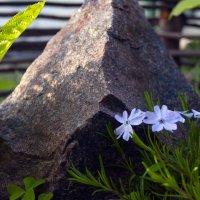 просто весна... :: Тамара