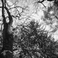просто деревья :: Андрей Баканов
