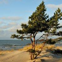 Балтика Зима :: Дмитрий Близнюченко