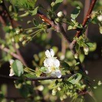 Весна.... :: Ирина Варская