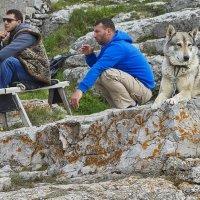 Волк и два поросенка :: M Marikfoto