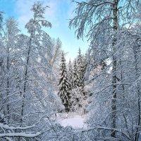 Зимний этюд :: Vadim Piottukh