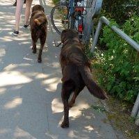Две ноги и два хвоста, восемь лап, два колеса. :) :: Nina Yudicheva