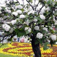 Московская весна. :: Елена