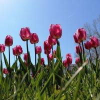 Весна в Краснодаре :: Анатолий