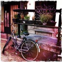 Про велосипед :: Татьяна Василюк