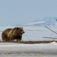 Медведь :: Валера Коненков