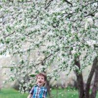 белая весна :: Инга Твердова (Вашкунайте)