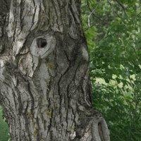 У деревьев тоже есть лица... :: Balakhnina Irina