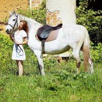 Horse :: Ольга Ярахтина