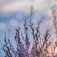 миндаль цветёт... :: Татьяна Полянская