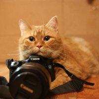 фотограф :: Кошата