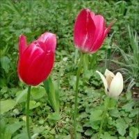 Мы рады каждому цветочку :: Нина Корешкова