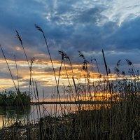 На фоне заката :: Galina