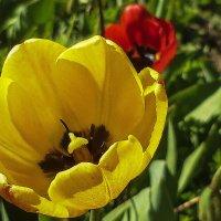 Весна дарит цветы :: юрий Амосов