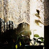 Из окна. :: Шура Еремеева