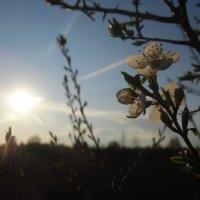 Весна. :: Шура Еремеева