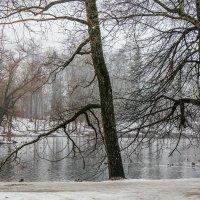 Мартовский туман :: Алёнка Шапран