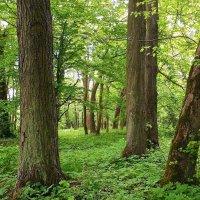 Лесной ландшафт :: Маргарита Батырева