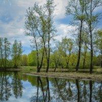 Весеннее зеркало. :: юрий Амосов