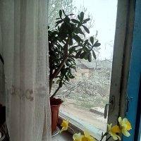 ... :: Миша Любчик