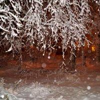 дерево в снегу :: Валерия Воронова