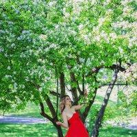 когда яблони цветут :: Ксения Цапко