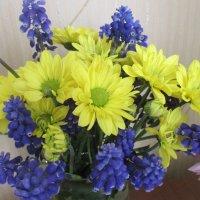 Желто-синее сочетание цветов. :: Valentina