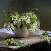 Цветет черемуха к похолоданию... :: Алина