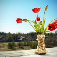 Букет на окне :: Денис Кацаров