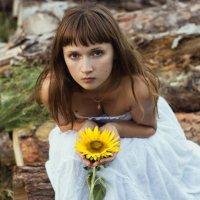 Sunflower :: Андрей Даниилов