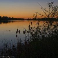 Майский вечер на Лебяжьем озере. :: Виктор Евстратов