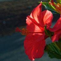 Немного цветов :: Witalij Loewin