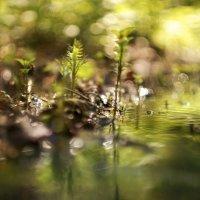 Зайчики света у ручья :: sorovey Sol