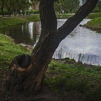 В парке :: сергей адольфович