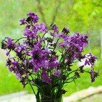 Полевые цветы :: Леонид Железнов