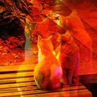 Притворимся кошками :: Ирина Сивовол