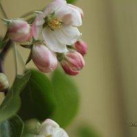 И тонкий запах аромата, и нежность редкой красоты :: Марина Щуцких