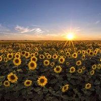 Солнечное поле :: Сергей