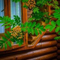 Рябина у окна :: Виталий Волков